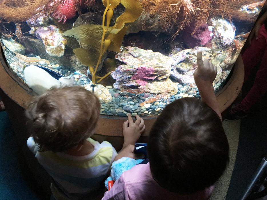 060516_aquarium33