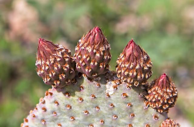 Cactus-14-7D1-a-022517-(5)
