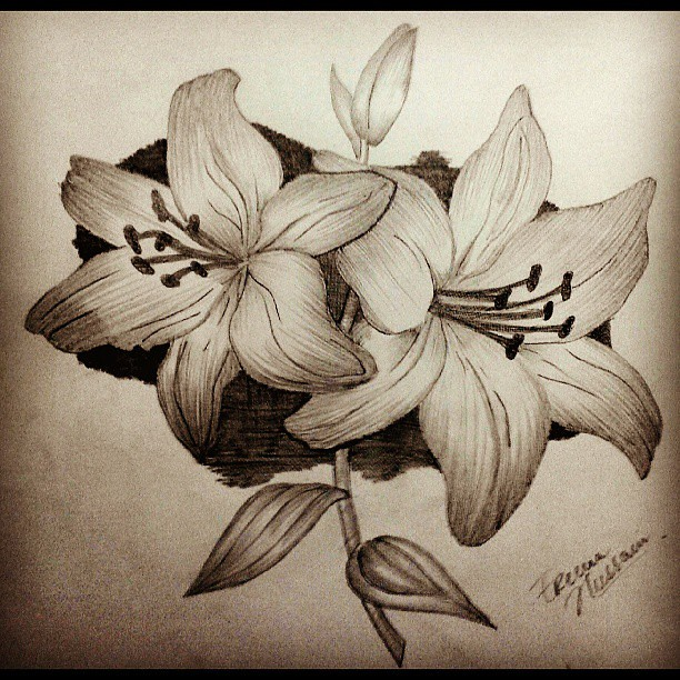 Pencil drawing art creative hobby loveit