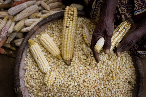 Africa Food Security 12 | by DFAT photo library