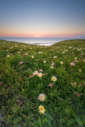 Flowers of Half Moon Bay, CA | by eddit