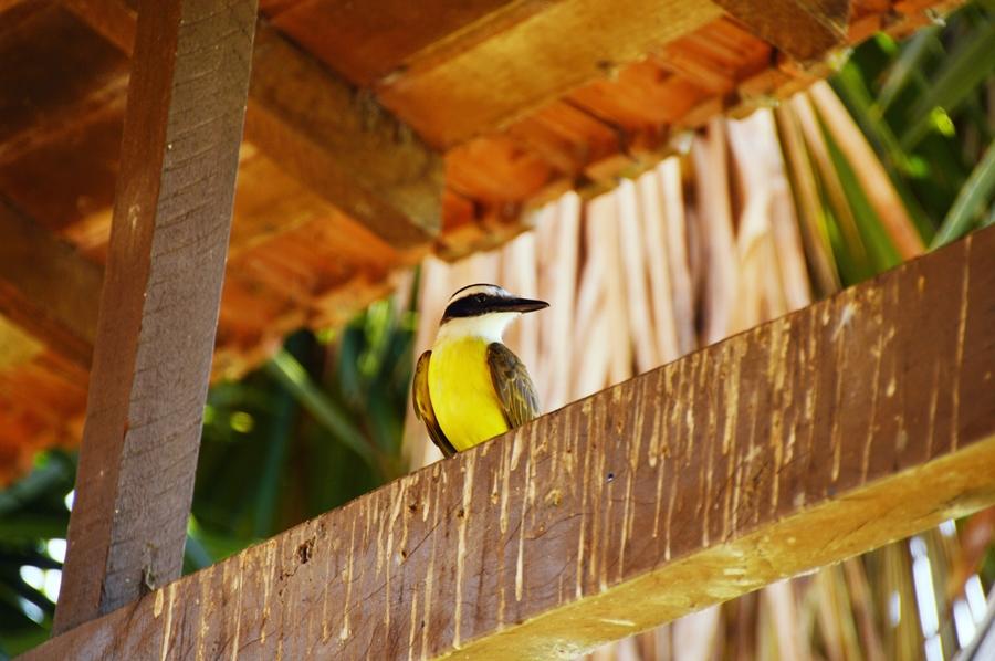 pantanalanimals19