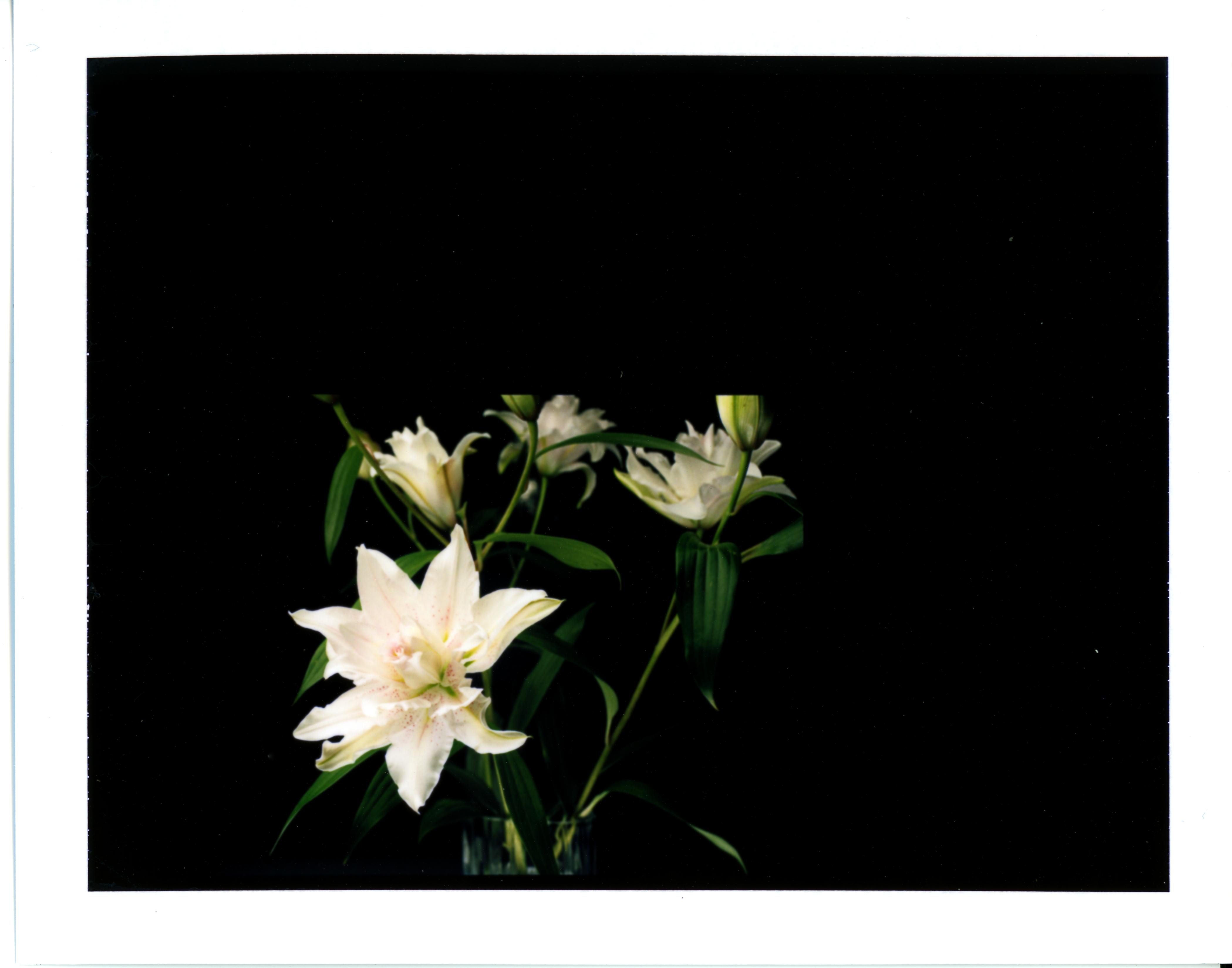 FujiFP100C Rose Lily