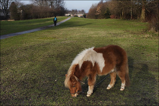 Pony grazing on the dismantled Wednesbury Oak railway (1/13 io16) | by Ted and Jen