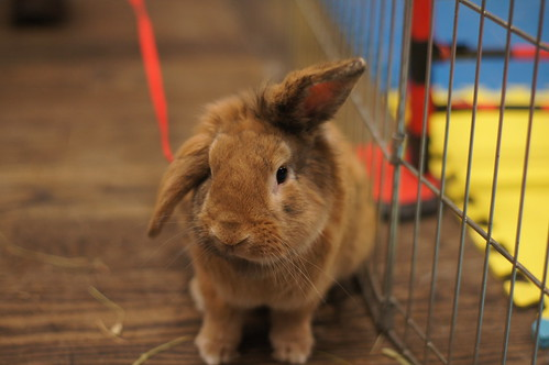 Rabbit Checks