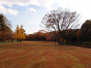 Kitanomaru Park @ Kokyogaien National Gardens | by *_*