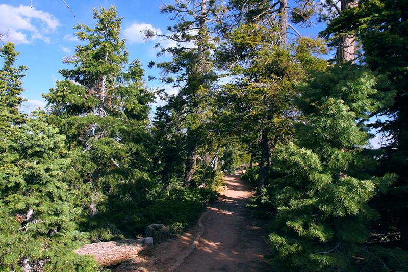 IMG_1021 Bristlecone Loop Trail
