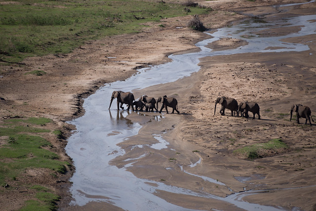 Elephants Crossing Tarangire River