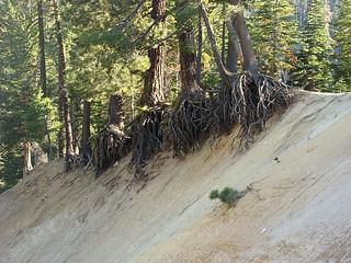 025 Bomen bij Sulphur Works