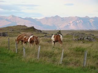 099 Avondwandeling bij Smyrlabjörg met paarden
