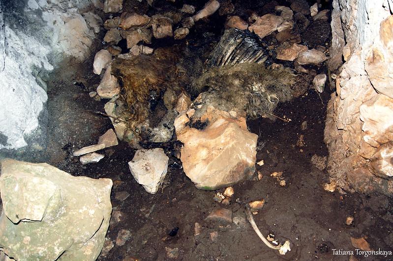 Останки барашка на полу пещеры