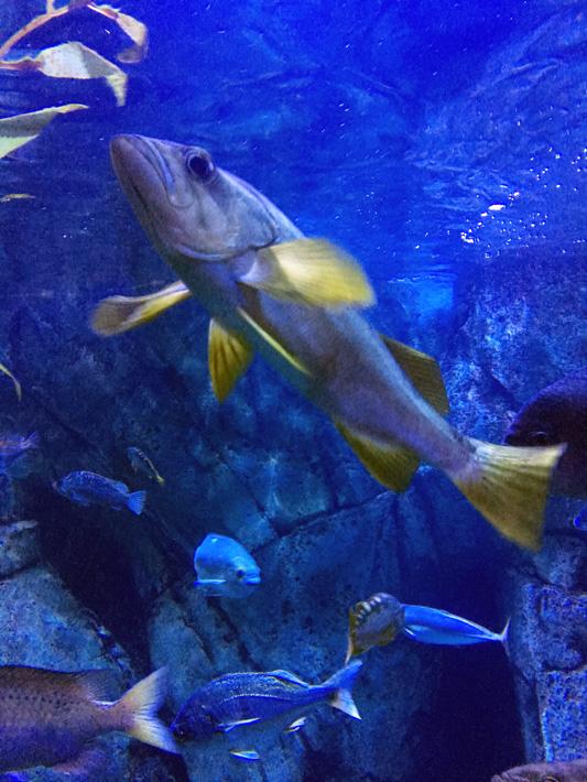 060516_aquarium05