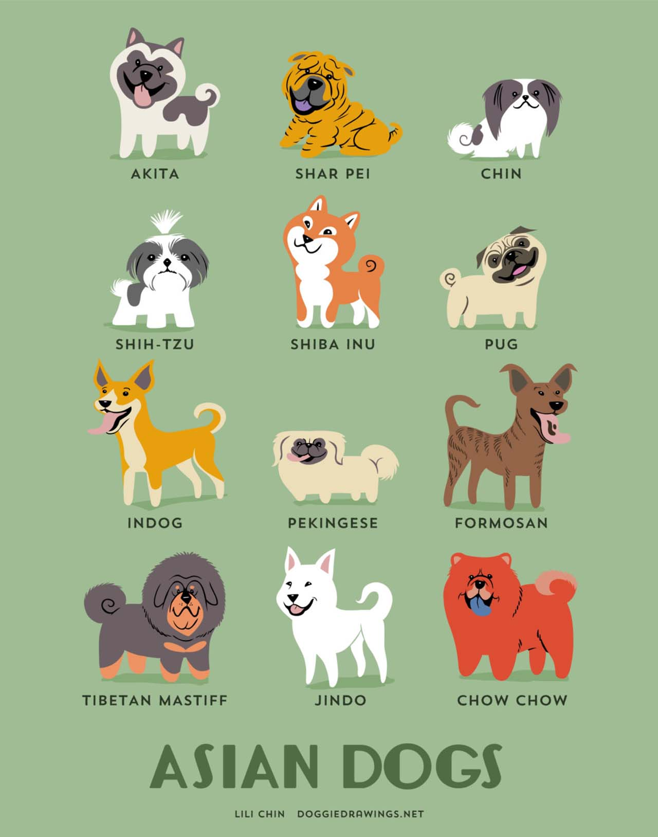 Origin Of Dogs: Cute Illustration By Lili Chin Show Where Dog Breeds Originating From #18: Asian Dogs