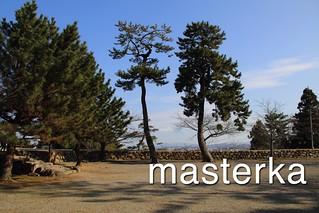 松阪城の松