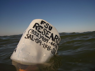 Buoy marking the Apalachicola experiment | by wfsu.org
