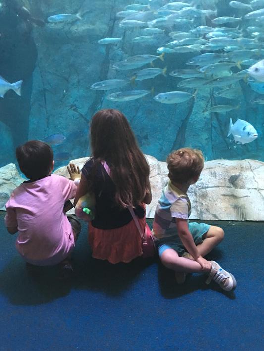 060516_aquarium31
