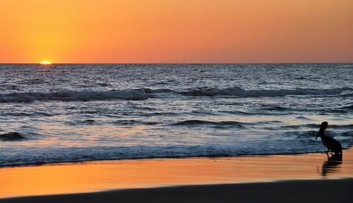 158 Cabeza Toro, Playa Sol (52)