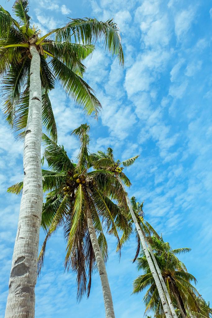 Carnaza Island (16)
