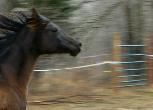 blackhorserunning