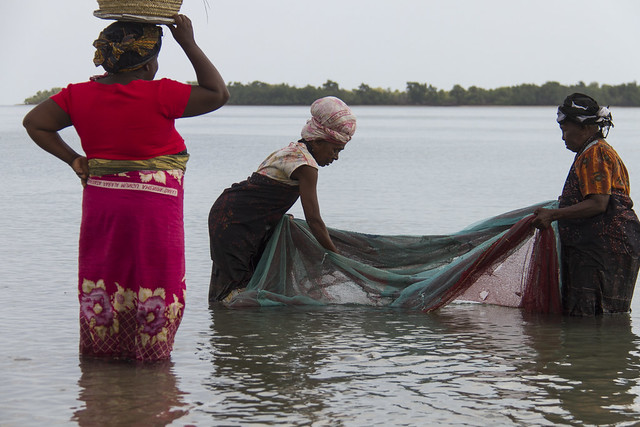 Working as a team; fisher women catching small fish and shrimp in Bagamoyo, Tanzania. Photo by Samuel Stacey, 2013.