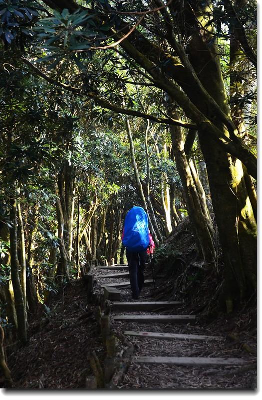 北大武山登山步道 8