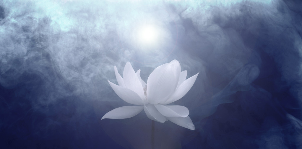 white lotus  white lotus  bahman farzad  flickr, Natural flower