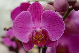 Orchid | by Rene Mensen