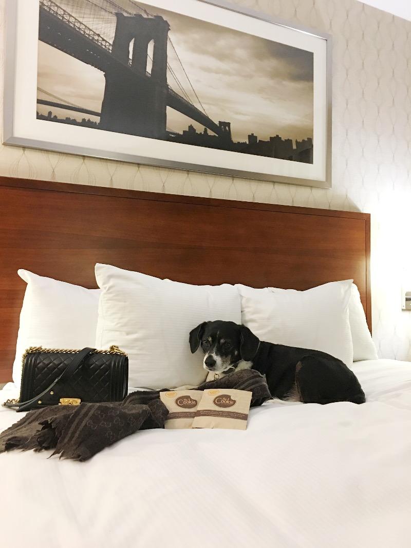doubletree-hilton-hotel-king-beg-dog-10