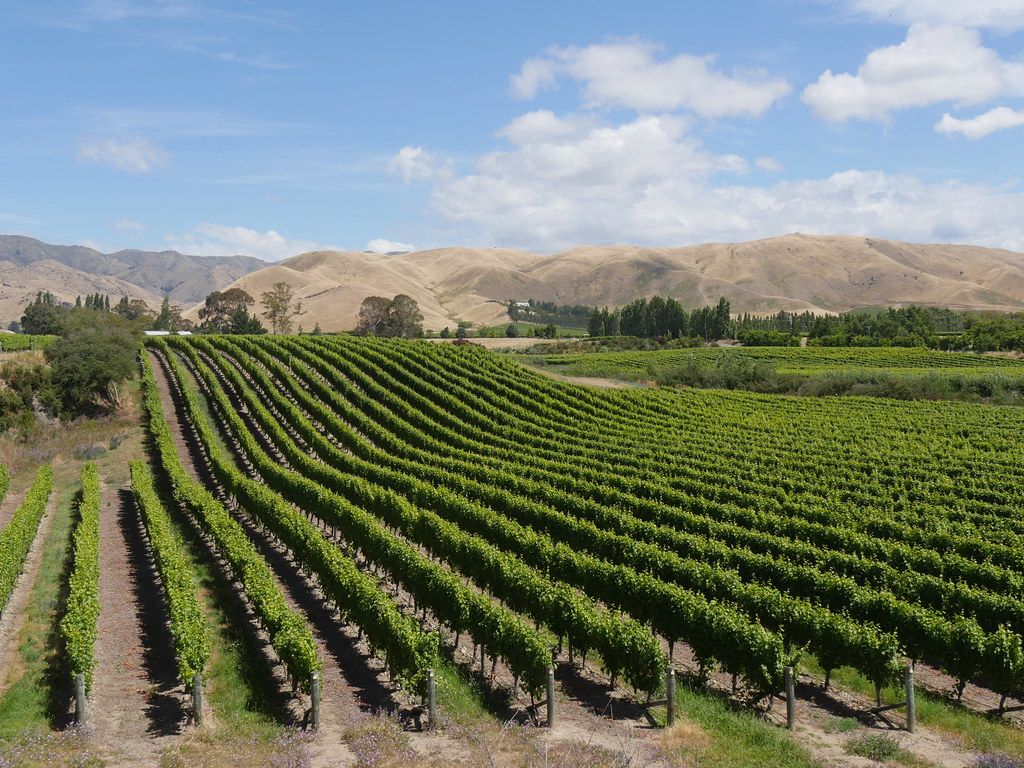 NewZealandWairauValleyVineyards033