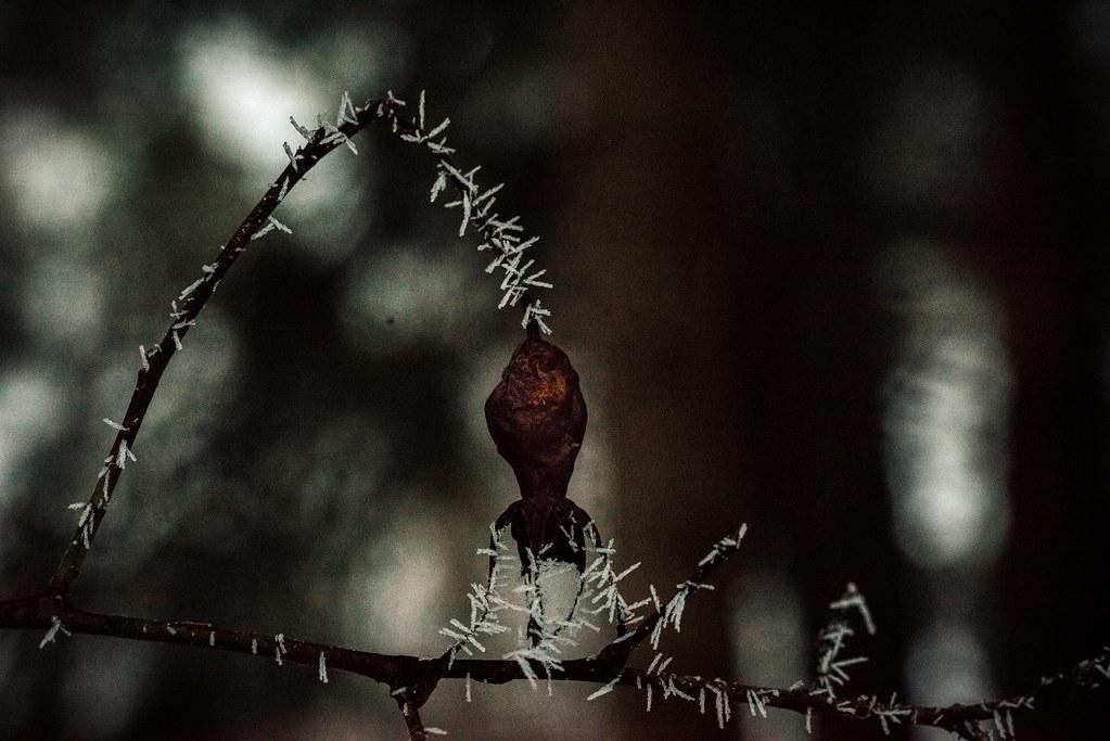 leh ladakh photography tour j