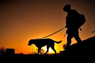 Solo Dog Boarding Sheffield