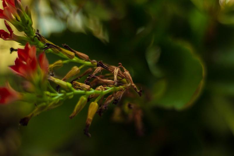 leaves-12