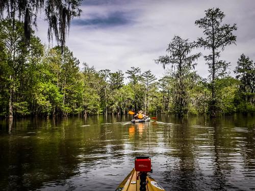 Sparkleberry Swamp-73