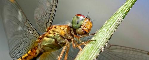 Dragonfly32_web_1024