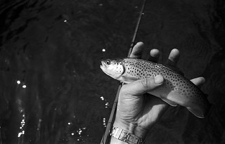 Brown Trout | by Adams100