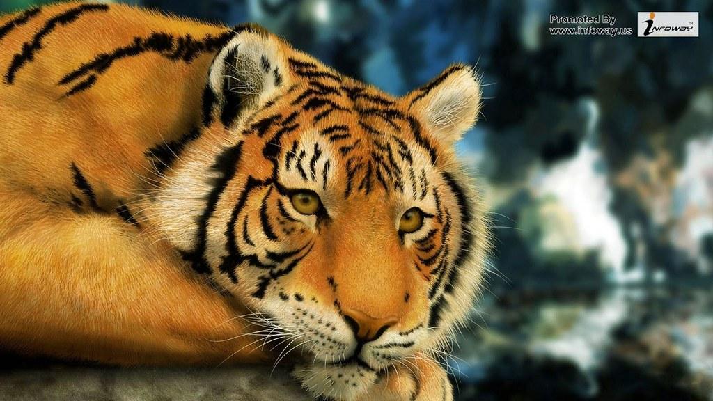 Cool Tiger Wallpaper HD