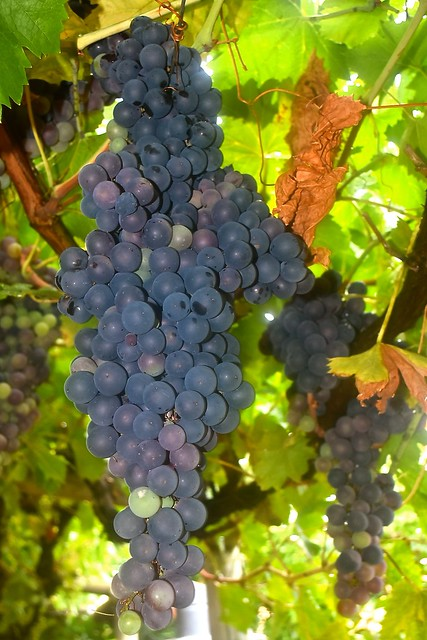 It's time to start eating our grapes - 13 February 2017
