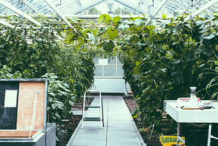 Greenhouse at De Kas | by Ashlae | oh, ladycakes