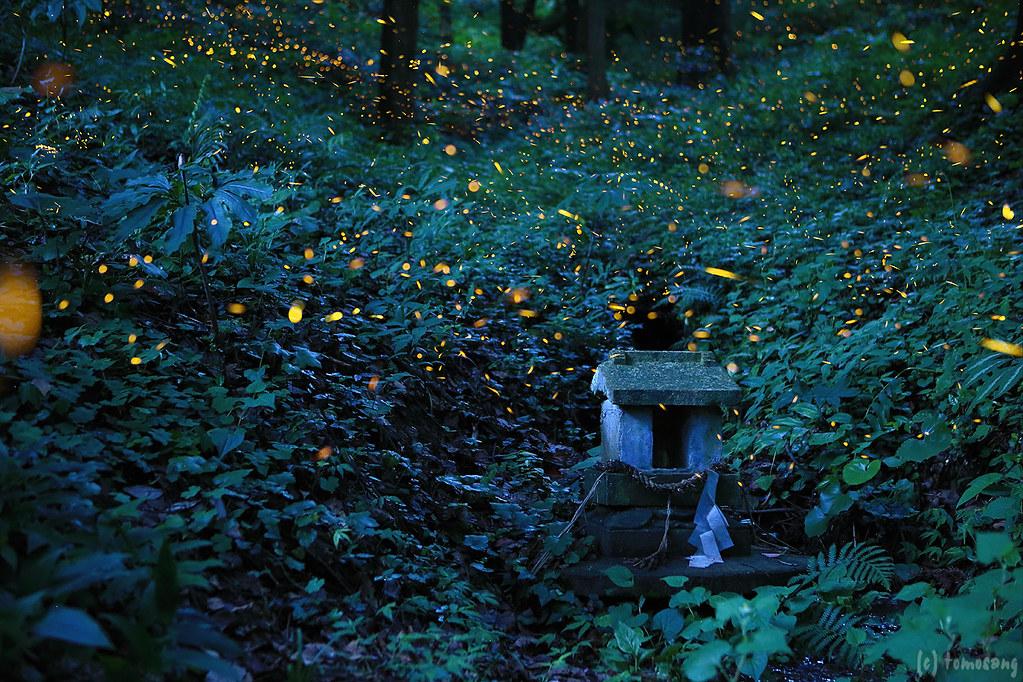 Firefly 2015 (Kurate)