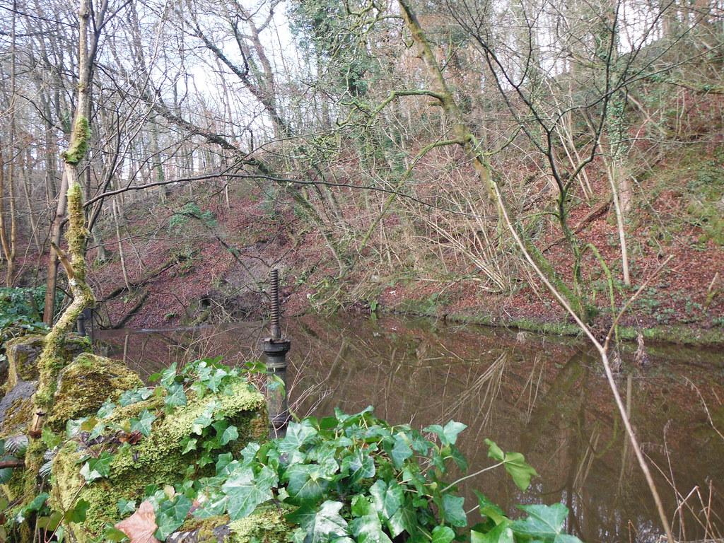 Skipton Wood 20