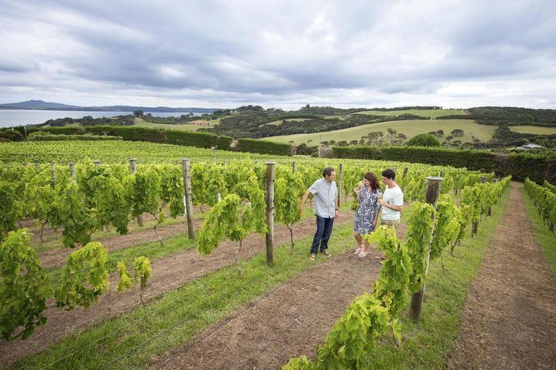 Waiheke Wineries