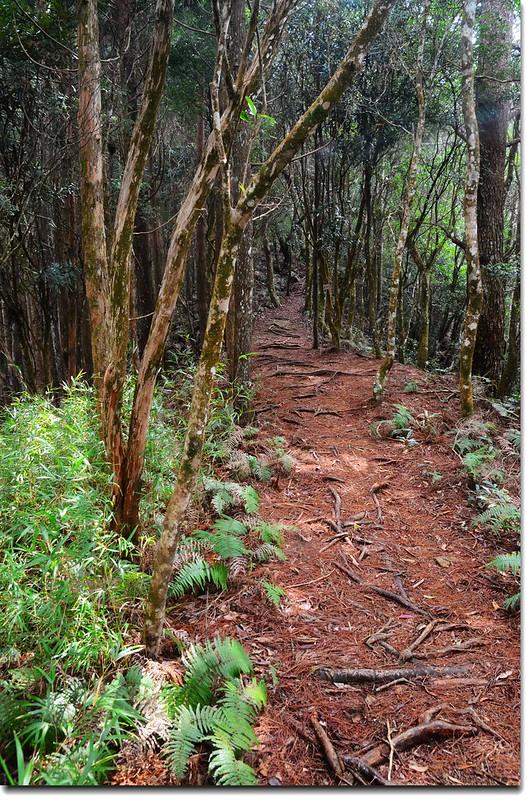 高台山登山步道 9