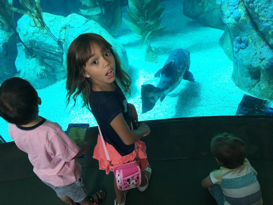 060516_aquarium04