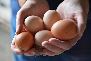 Eggs in Hands | by UnitedSoybeanBoard