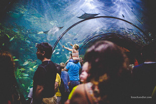 Aquarium -2 | by elisabethclair