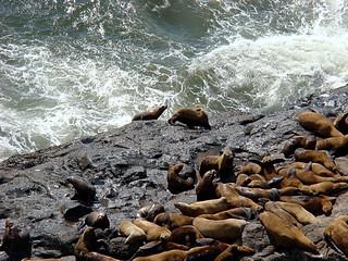 047 Sea Lion Caves buiten