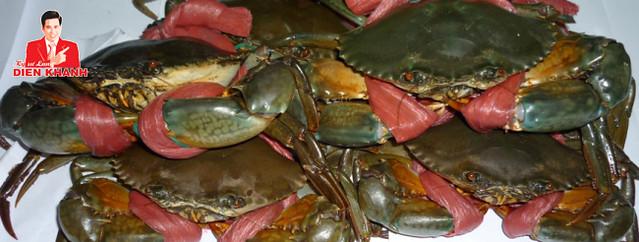 live mud crab 1