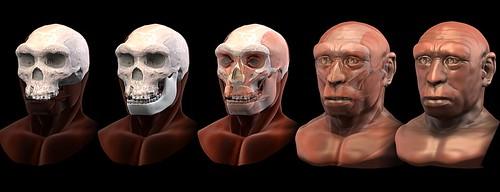 Homo_heidelbergensis_-_forensic_facial_reconstruction
