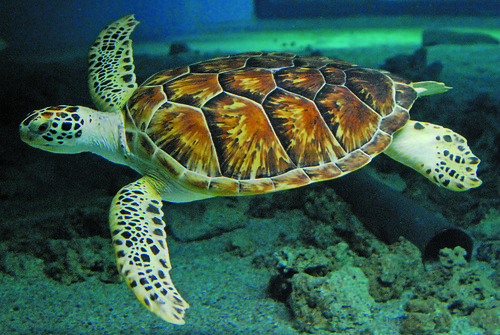 Image Result For Norwalk Aquarium