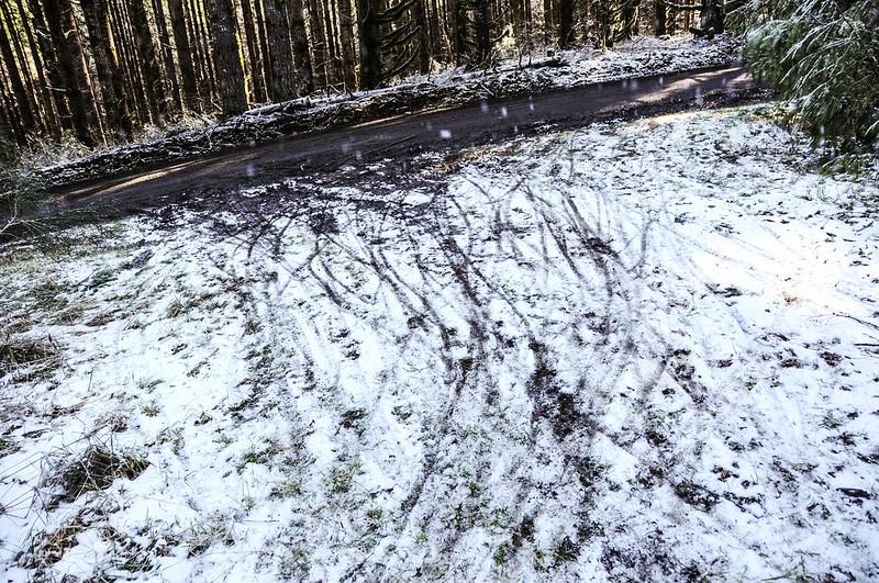 Timber Logjam-24.jpg